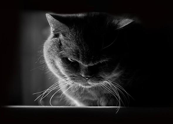 ©Keren Segev Os Mistérios dos Gatos em Preto e Branco