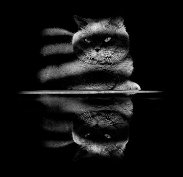 ©Keren Segev2 Os Mistérios dos Gatos em Preto e Branco
