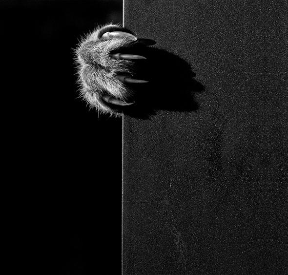 ©Laia Os Mistérios dos Gatos em Preto e Branco