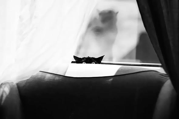 ©Liudmila Wilchevskaya Os Mistérios dos Gatos em Preto e Branco