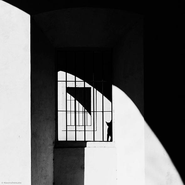 ©Massimo Della Latta Os Mistérios dos Gatos em Preto e Branco