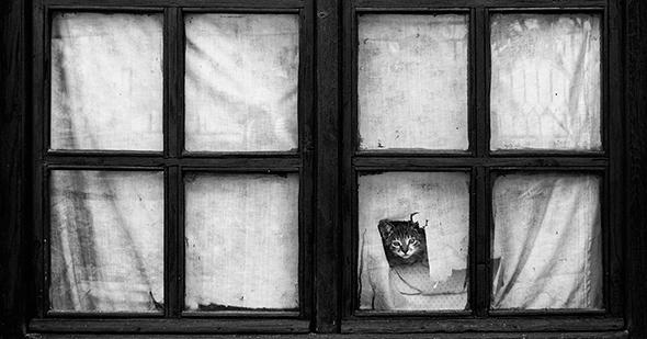 ©Milos Jovanovic Os Mistérios dos Gatos em Preto e Branco
