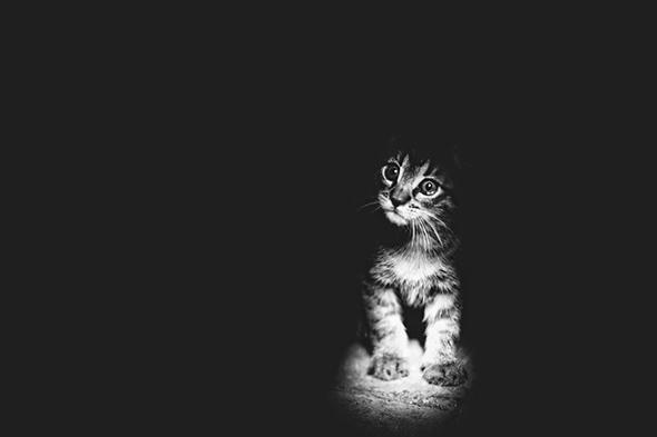 ©Monika Malek Os Mistérios dos Gatos em Preto e Branco