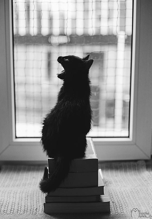 ©Monika Malek2 Os Mistérios dos Gatos em Preto e Branco