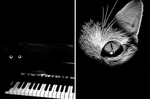 ©Monika Malek3 Os Mistérios dos Gatos em Preto e Branco