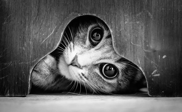 ©Pierre Adnin Os Mistérios dos Gatos em Preto e Branco