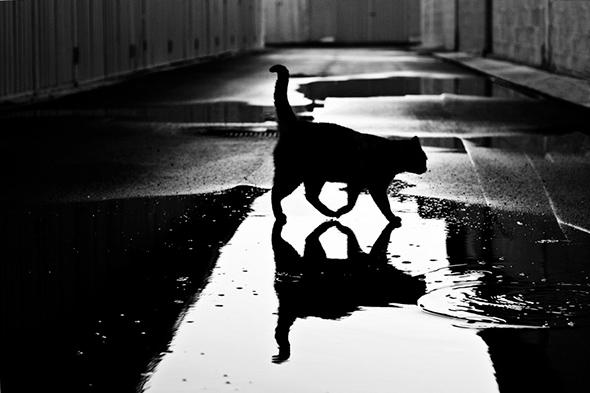 ©Ruggiero Scardigno Report Os Mistérios dos Gatos em Preto e Branco