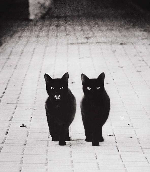 ©Subway M Os Mistérios dos Gatos em Preto e Branco