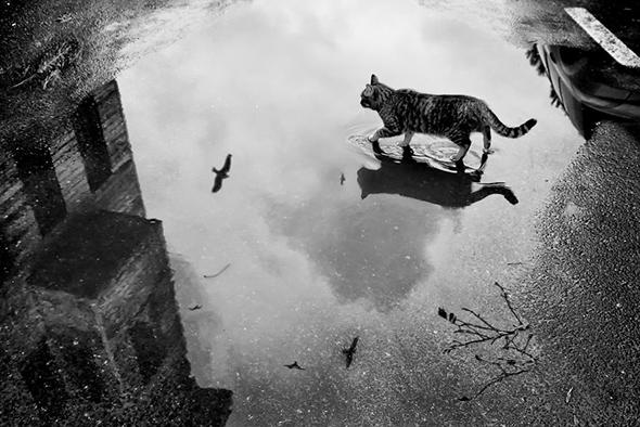 ©Umran Inceoglu Os Mistérios dos Gatos em Preto e Branco