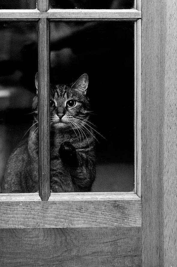 ©Val D'Aquila Os Mistérios dos Gatos em Preto e Branco