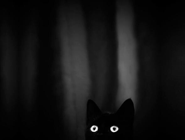 ©Veronika Klimonova Os Mistérios dos Gatos em Preto e Branco