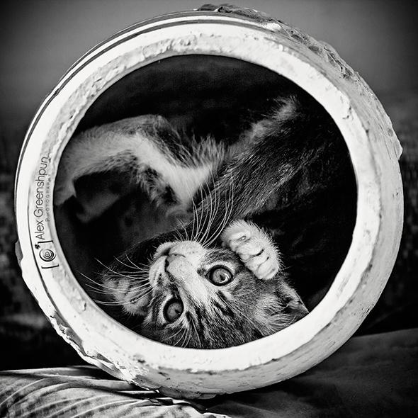©alexgphoto Os Mistérios dos Gatos em Preto e Branco