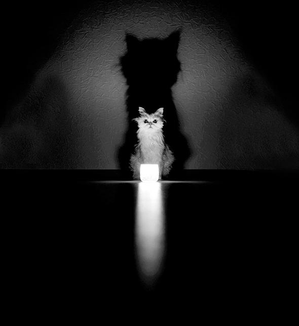 ©h0i im rei Os Mistérios dos Gatos em Preto e Branco