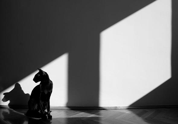©usyaka Os Mistérios dos Gatos em Preto e Branco