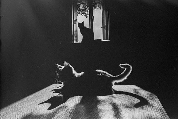 ©wakoo22 Os Mistérios dos Gatos em Preto e Branco
