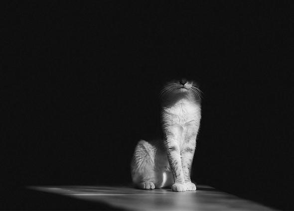 gato Os Mistérios dos Gatos em Preto e Branco