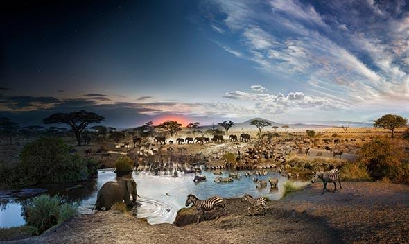 Serengeti National Park Tanzania Low A Passagem do Tempo Capturada em uma Única Foto