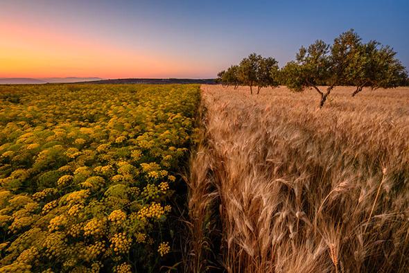 10Ajloun Field Sunset 960x641 Guia Completo de Distância Hiperfocal