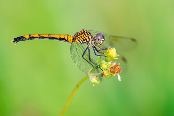 3 Dragonfly 960x640 A Versatilidade das Lentes Prime