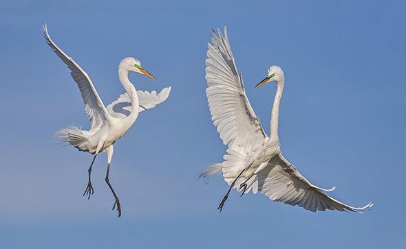 Bird in Flight 3 960x590 Como Fotografar Pássaros Voando