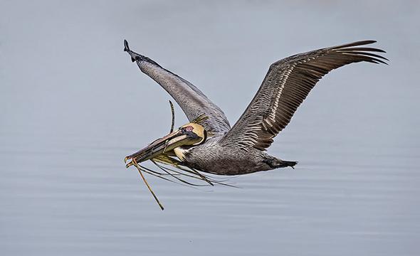 Bird in Flight 5 960x586 Como Fotografar Pássaros Voando