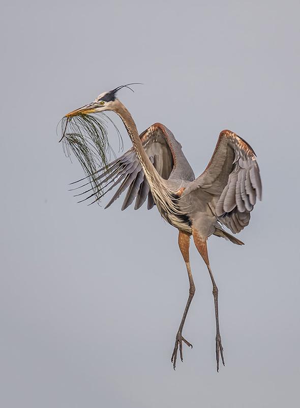 Bird in Flight 7 707x960 Como Fotografar Pássaros Voando