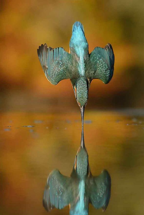 Pássaro Alan McFayden Como Fotografar Pássaros Voando
