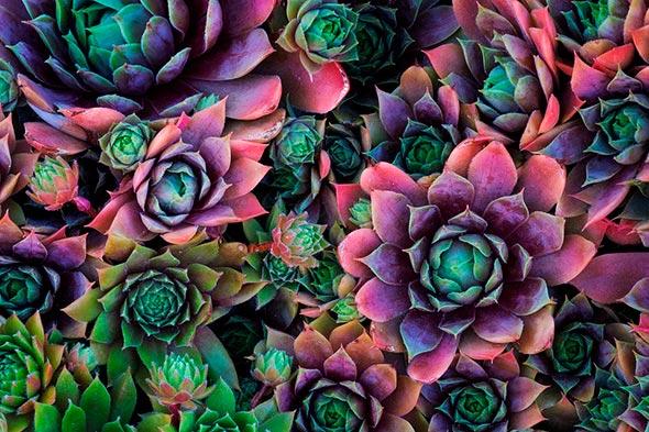 Sarah Marino 1 960x640 Seis Dicas Para Tirar Fotografias Melhores de Plantas