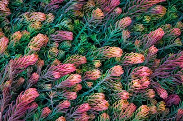 Sarah Marino 2 960x640 Seis Dicas Para Tirar Fotografias Melhores de Plantas