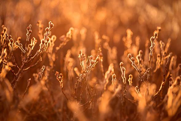 Sarah Marino 6 960x640 Seis Dicas Para Tirar Fotografias Melhores de Plantas