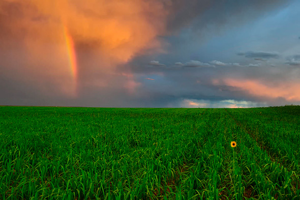 Sunset Sunflower 960x639 Como fotografar um Arco Íris